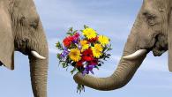 Какие цветы подарить девушке? (рис. 3)