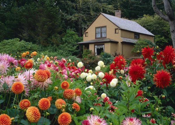 Розы из Greensad, которые смогут кардинально изменить Ваш сад (рис. 5)