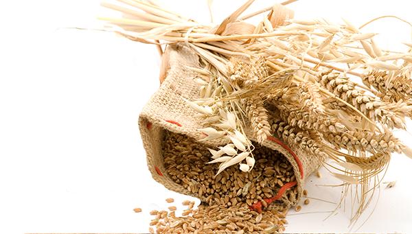Масло зародышей пшеницы (рис. 1)